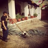 The Jimador. The man who removes all the leaves to reveal the piña. All of which happens in about two minutes.